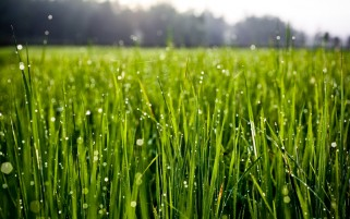 Next: Water Drops Grass Close Up