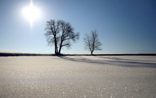 Two Trees Sun & Snow wallpapers and stock photos