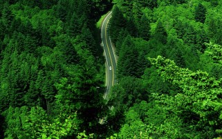 Grass Green Forest & Road wallpapers and stock photos