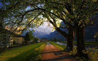 Trees Path Houses Scenic Swiss wallpapers and stock photos