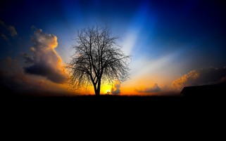 Dark Tree Field & Sunset wallpapers and stock photos