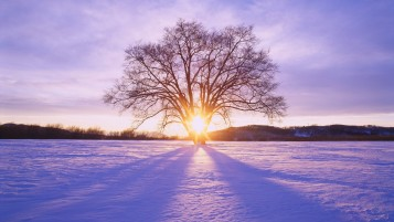 Shiny Sun Tree & Snow Scenery wallpapers and stock photos