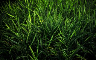 Light Green Grass Close Up wallpapers and stock photos