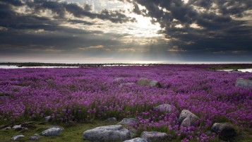 Purple Flowers Stones & Sky wallpapers and stock photos