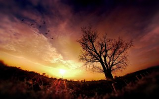 Tree Birds & Sunset Campo wallpapers and stock photos