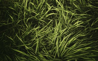 Grass Close Up wallpapers and stock photos