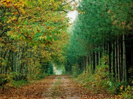 Lovely Autumn Forest & Way wallpapers and stock photos