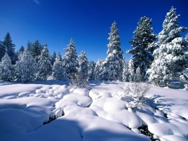Snow Trees & Winter Scenic wallpapers and stock photos