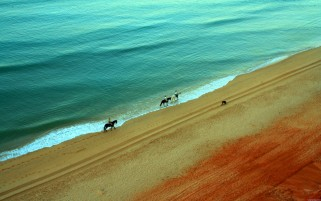 Ocean Beach Horses & Gente wallpapers and stock photos