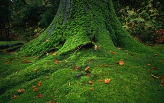 Green tree wallpapers and stock photos