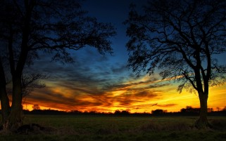 Trees Grass & Field Sunset wallpapers and stock photos