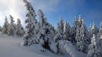 Long Winter Snow Trees wallpapers and stock photos