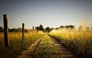 Summer Road Fields & Fences wallpapers and stock photos