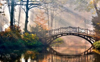Forest Bridge Morning Light wallpapers and stock photos
