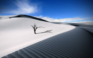 Previous: Lone Wood & White Desert