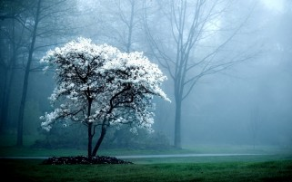 Next: Charming White Tree Foggy