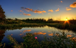Sun Forest Pond Grass & Sky wallpapers and stock photos