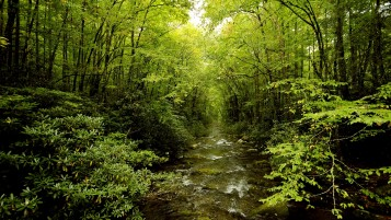 Lovely Green Forest & Creek wallpapers and stock photos