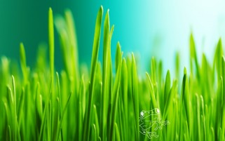 Grass & Foggy Close Up anzeigen wallpapers and stock photos