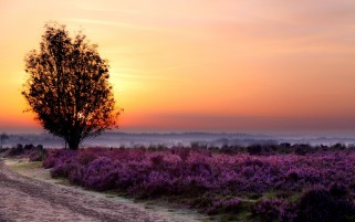 Next: Purple Flower Field Tree & Way