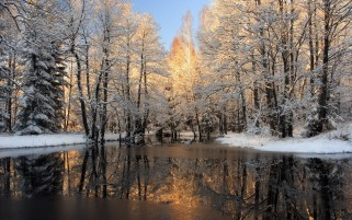 Winter Trees Snow & Lake wallpapers and stock photos