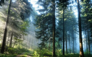 Forest Sun Beams & Path wallpapers and stock photos
