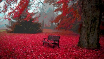 Random: Red Autumn Carpet Bench Tree