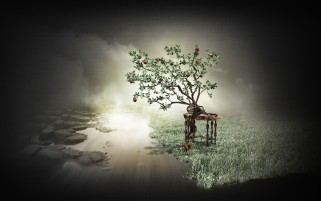 Apple Tree Water Grass & Stone wallpapers and stock photos