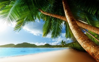 Chill Out Beach Palm Trees wallpapers and stock photos