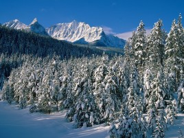 Mountains Trees Canada Alberta wallpapers and stock photos