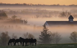 Foggy horsefarm wallpapers and stock photos