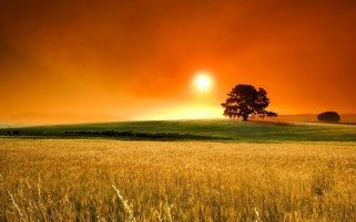 Corn Field Sunset Grass Trees wallpapers and stock photos