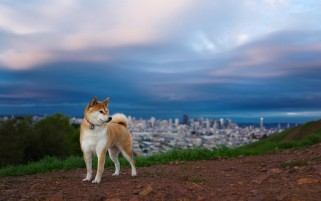 Dog Scenery & City wallpapers and stock photos