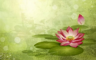 Abstract Lotus wallpapers and stock photos