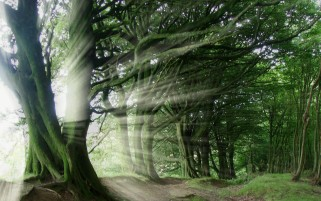 Nature Trees Light Burst wallpapers and stock photos