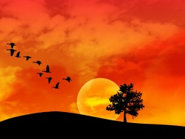 Random: Orange Sky Birds Tree Hill