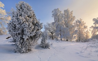 Next: Lovely Snow Trees Scenic Sun