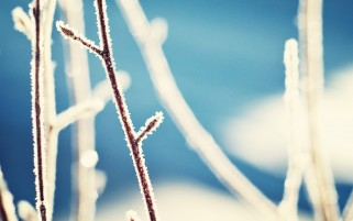 Frozen Branches wallpapers and stock photos