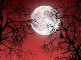 Next: Full Moon Red Sky Dark Trees