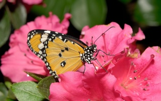 Butterfly Pink Flower wallpapers and stock photos
