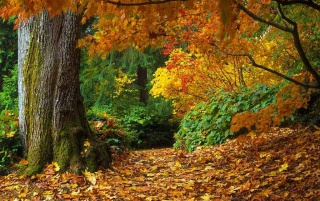 Details for the 'Autumn Forest' stock photo, free image