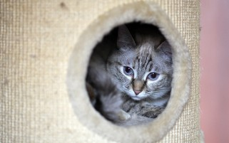 Random: Cozy Cat Hole