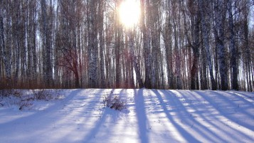 Bosque cubierto de nieve wallpapers and stock photos