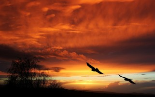 Next: Sunset Birds Orange Sky Trees