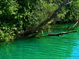 Turquoise Lake ramas y hojas wallpapers and stock photos