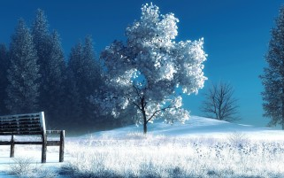 Wonderful Winter Tree & Grass wallpapers and stock photos