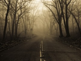 Mysterious Forest Fog & Street wallpapers and stock photos