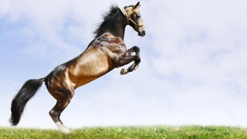 Beautiful Brown Horse wallpapers and stock photos