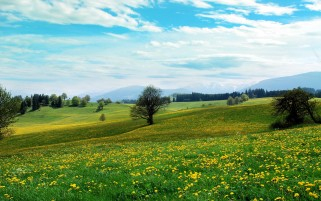 Dandelion Hills Trees & Sky wallpapers and stock photos