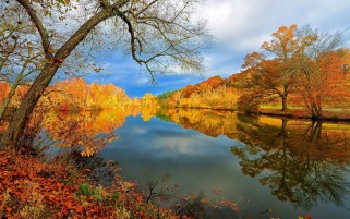 Autumn Trees Riverside wallpapers and stock photos
